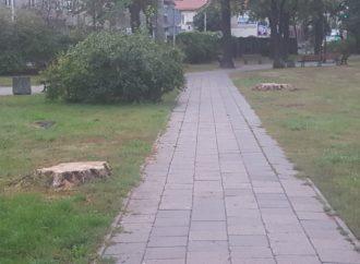O drzewach