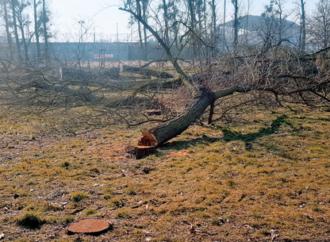 Powrót rzezi drzew