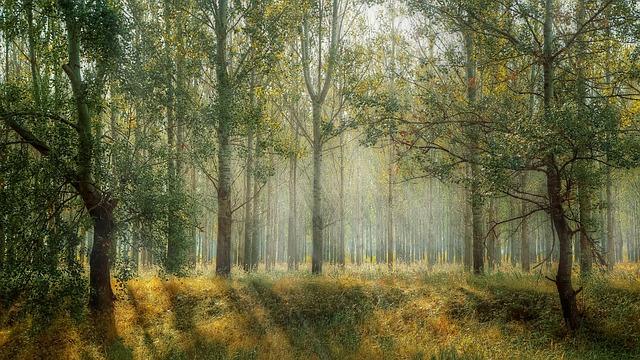 Patrząc na drzewa, nie widząc lasu